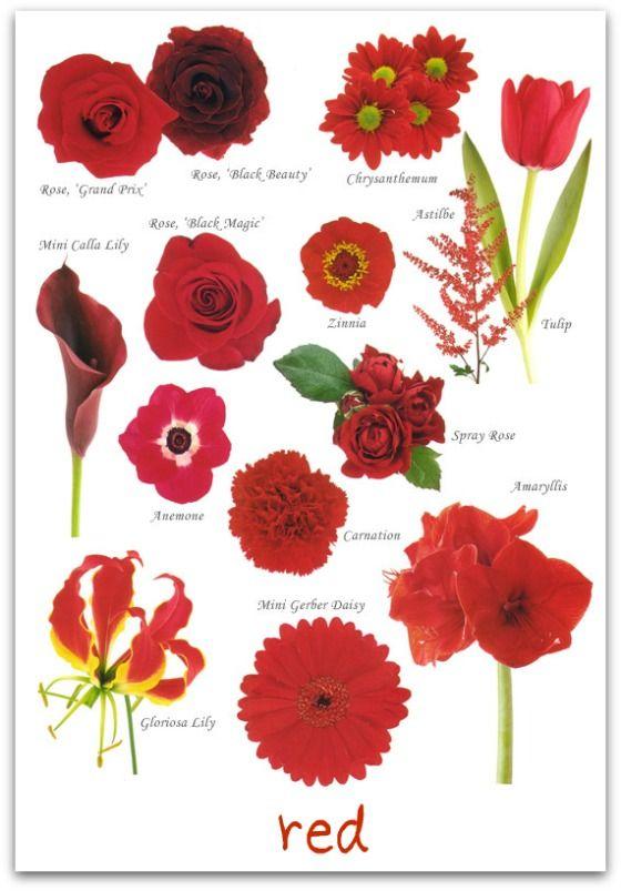 Red Wedding Flowers Mandy Bryant Dewey Seasons Bridal Ideas For