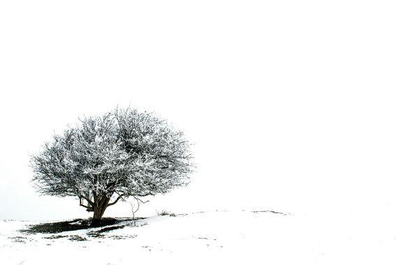 Eenzame boom in de sneeuw 2