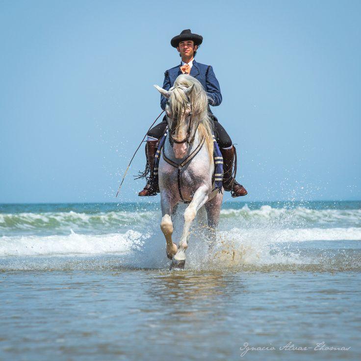 Behance :: Editing Andalusian Horses on Doñana