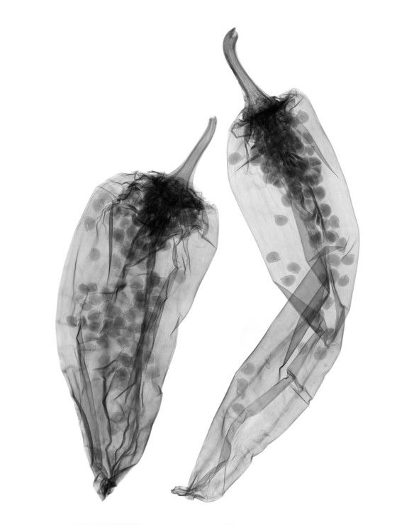 Two peppers - X-Ray Photography by Don Dodenbostel