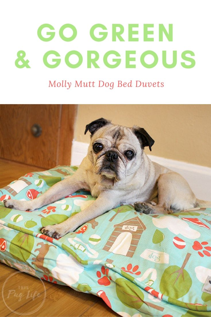 Pug Reviews Molly Mutt Dog Bed Duvets + Giveaway!