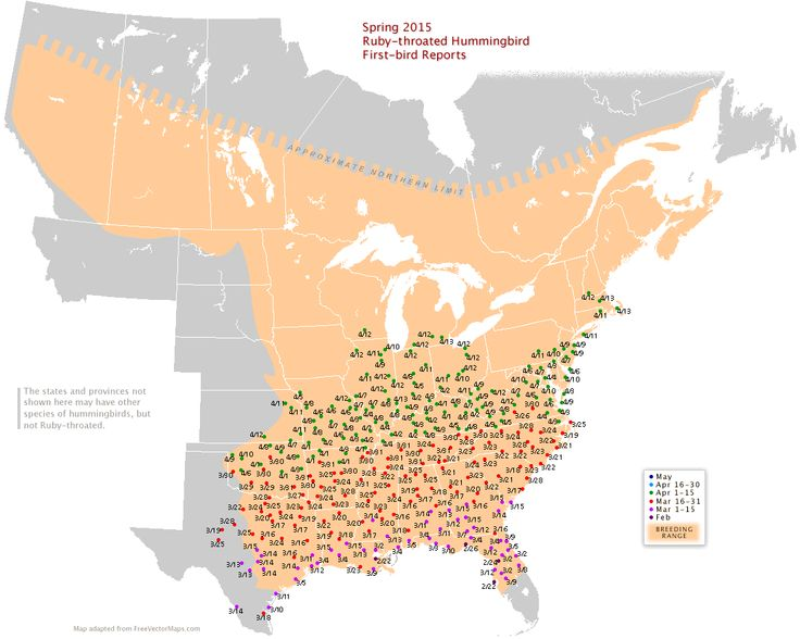 Spring 2015 Migration of RubyThroated Hummingbirds