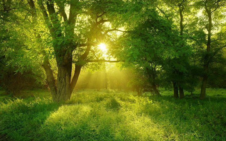 숲, 여름, 나무, 태양, 빛 1920x1200의