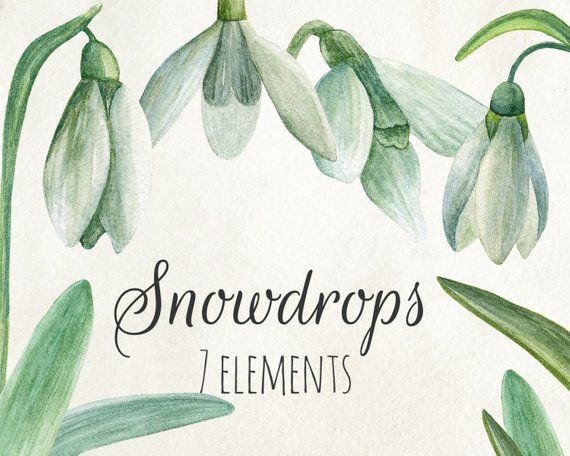 Snowdrop Clipart Watercolor Floral Hand Painted Spring Flowers Etsy Floral Watercolor Clip Art Flower Clipart