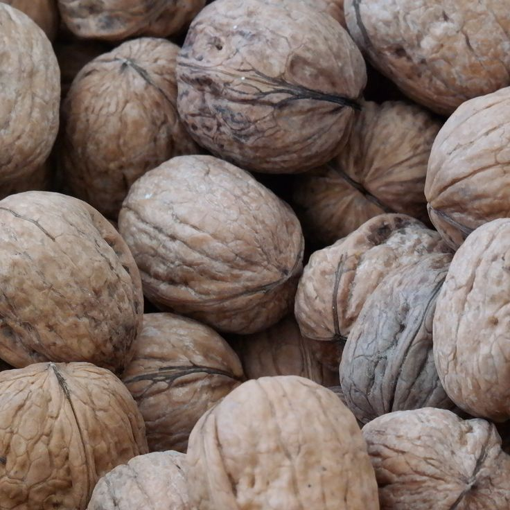 17 Best Images About Juglans Regia Nogal On Pinterest Trees English Walnut And We