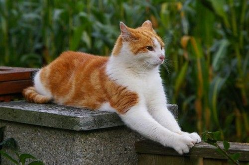 #Stress du #chat #blog #zoomalia #animalerie http://www.zoomalia.com/blog/article/problemes-reactions-chat.html
