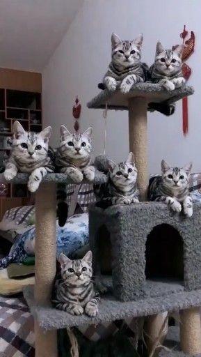 11 sinais chocantes que seu gato está deprimido – # Gato # Deprimido   – Kochen