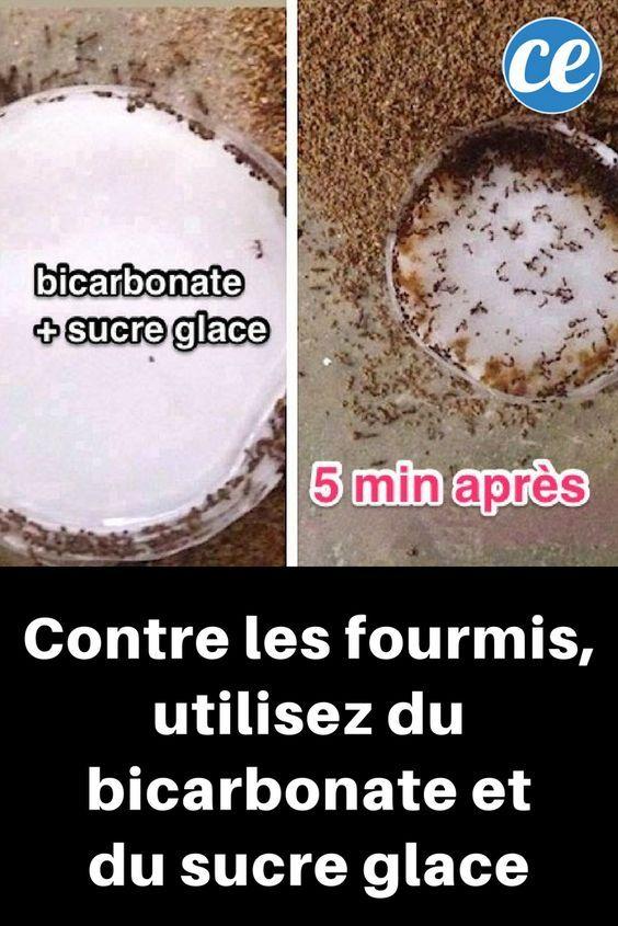 Le Bicarbonate Un Anti Fourmis Super Efficace Que Tout Le Monde