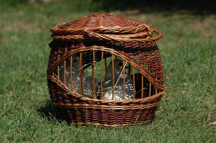 https://www.facebook.com/akos.kosar  Birds in the basket