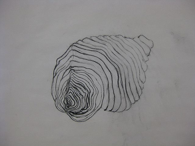 Contour Line Drawing Shell : Shell cross contour contours