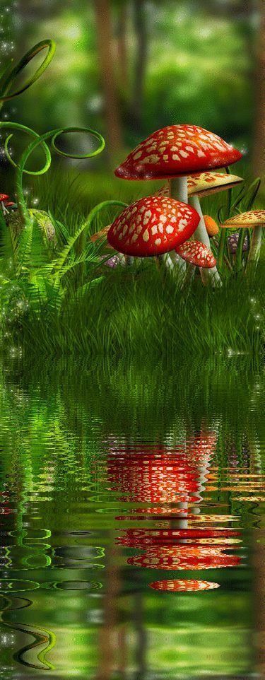 Beautiful fairy forest reflection. See more beautiful nature pictures… …