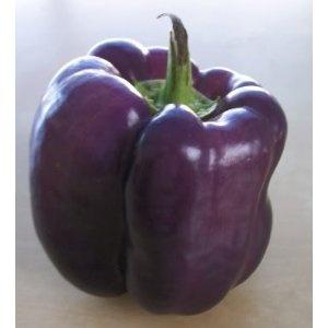 Purple bell pepper.