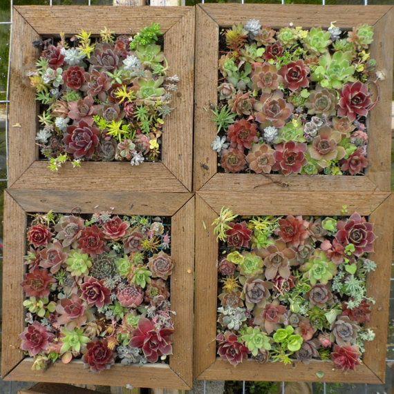Succulent Mosaic Vertical Garden Wall Art 8 inch by sosucculent, $75.00