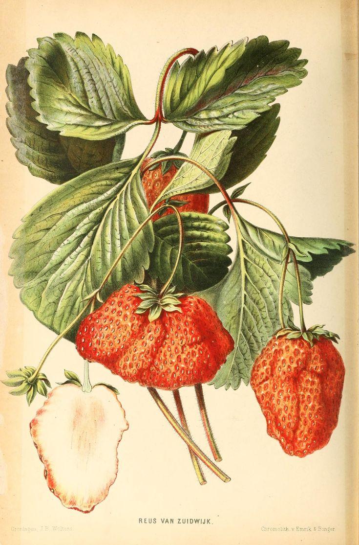 n237_w1150 Botanical illustration, Nature art prints