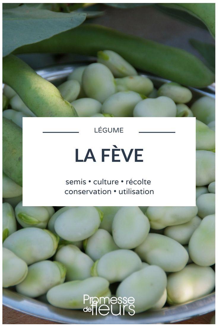 L. a. fève : semer, cultiver, récolter