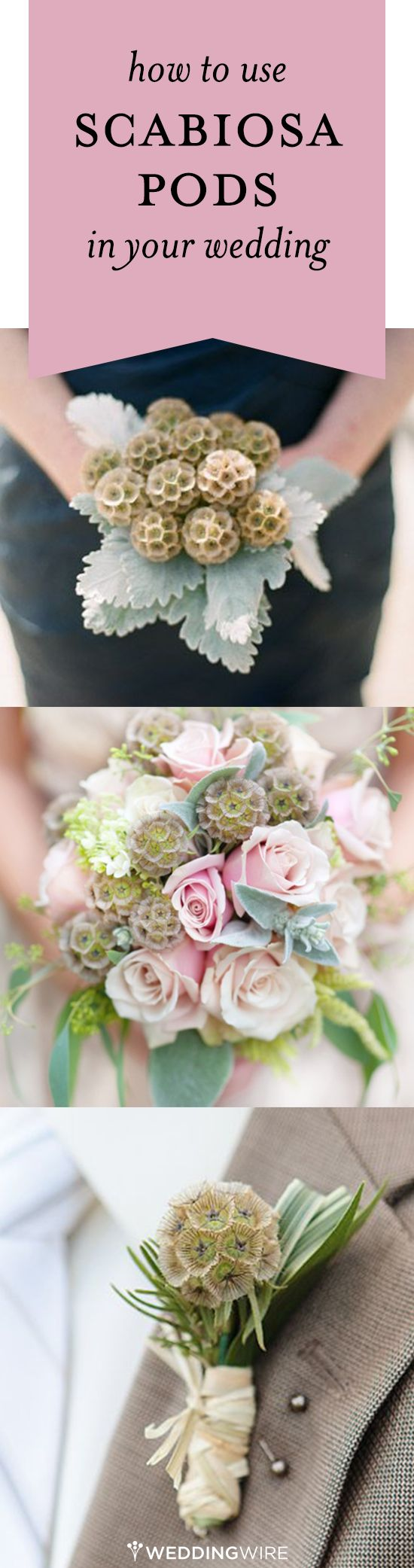 We love scabiosa pods! Find out how to use this unique accent in your wedding floral arrangements! #weddingflowers #FallBook