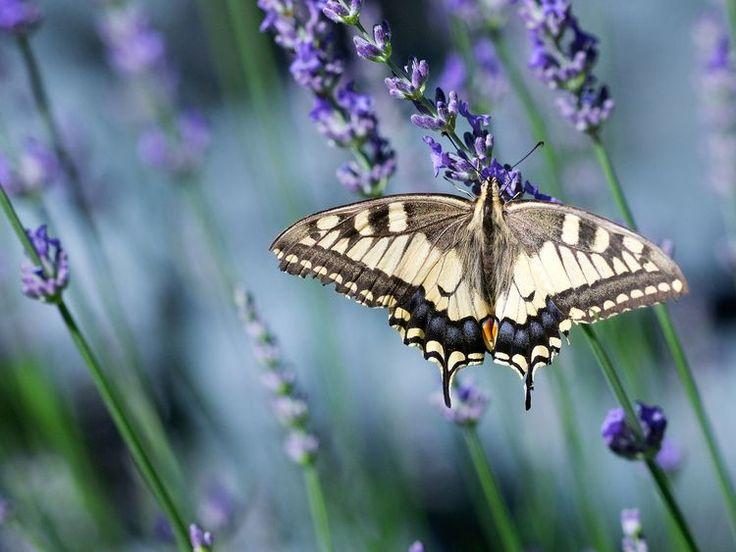 Best 25 Hummingbird Garden Ideas On Pinterest Hummingbird Flowers Hummingbird Plants And