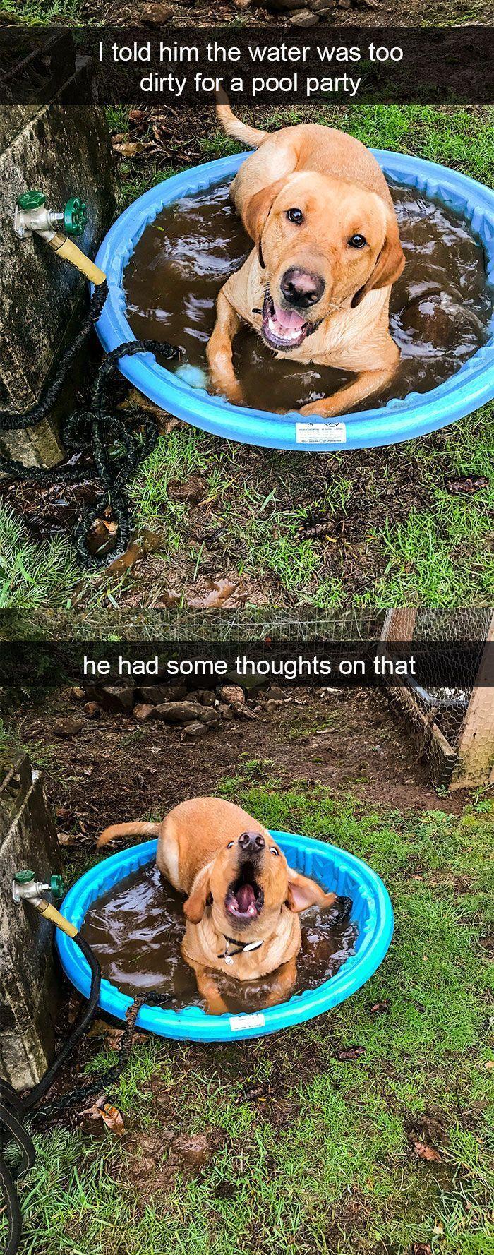 25+ lustige und niedliche Hund-Snapchats, die Ihren Tag (neue Bilder) #dogstuff machen