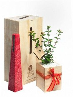 Christmas Gifts - Available from November Candle Scentsation Gift Box