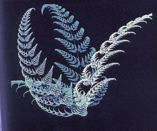 Fougère fractale en 3D  Fougère de Barnsley