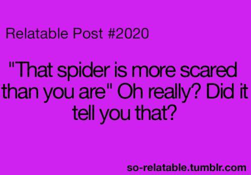spidersSpiders Humor, Killing Spiders Quotes, Funny Spiders Quotes, Scary Spiders, Relatable Posts, So True, I Hate Spiders, Spiders Funny, Funny I Hate You Quotes