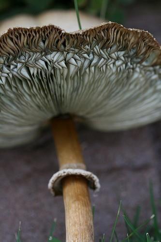 mushroom More