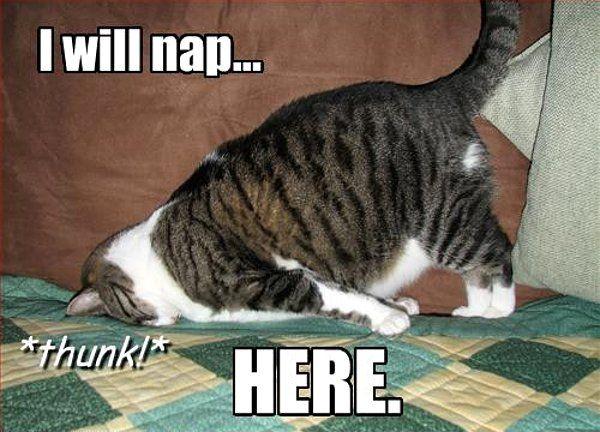 i will nap here cat