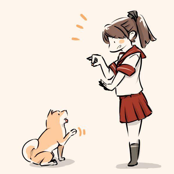 """しろうり on Twitter: """"まーーーーて。#敷波と柴犬 https://t.co/NjA4TMUZre"""""""