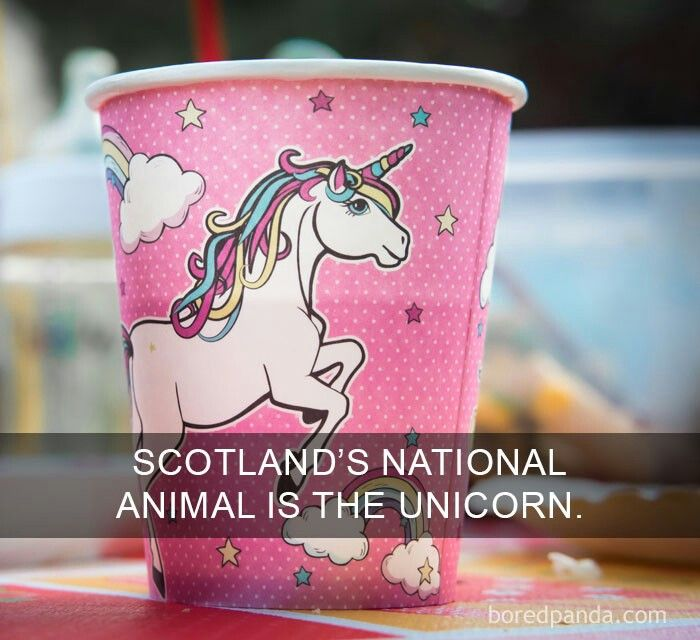Scotland's national animal is the unicorn
