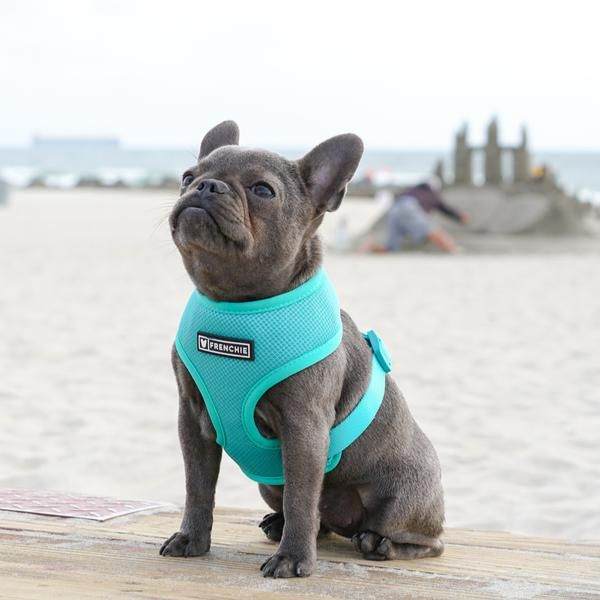 Frenchie Duo Reversible Harness Teal Grey Dog French