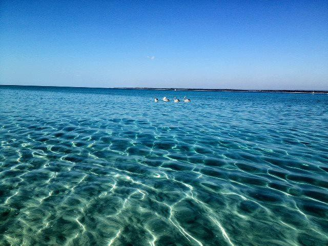 Crystal clear waters around Pelican Banks in Hervey Bay