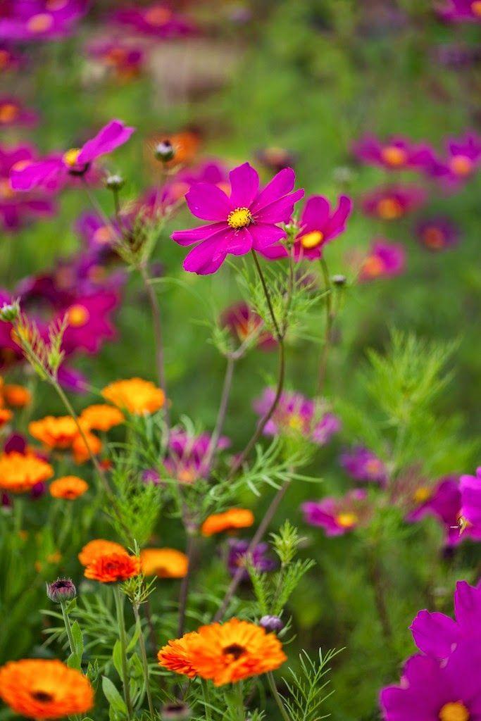 Frø såing blomster grønnsaker såtid så