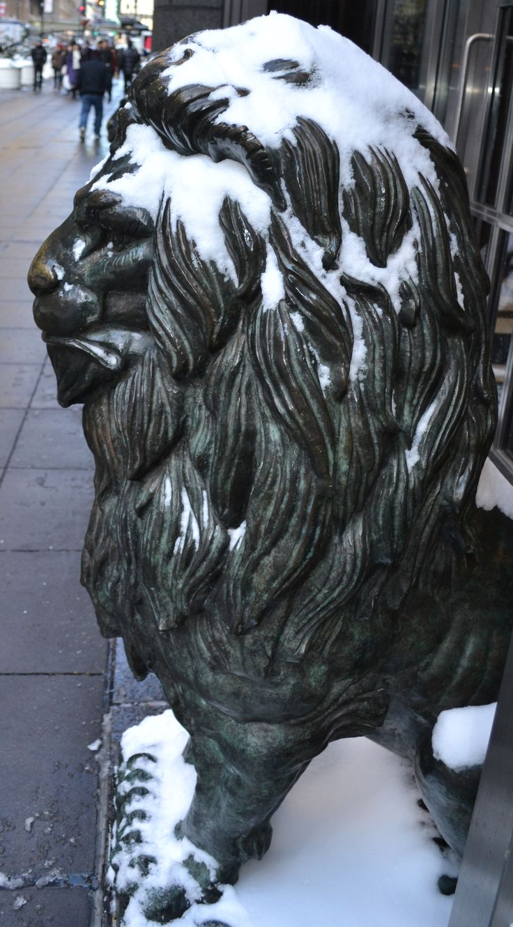 I thought this regal lion looked even more regal with his snowy head.