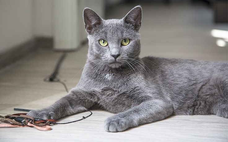 100 Grey Cat Names! Welcome to our complete guide to the best names for grey cats. Bringing you over 100 amazing grey cat names for your new kitty!