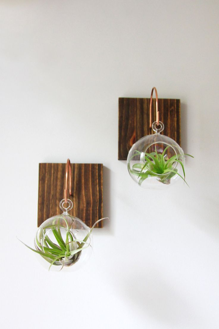 198 best Lifestyle Decor images on Pinterest Air plants Plant