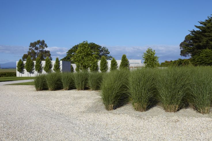 mass of miscanthus