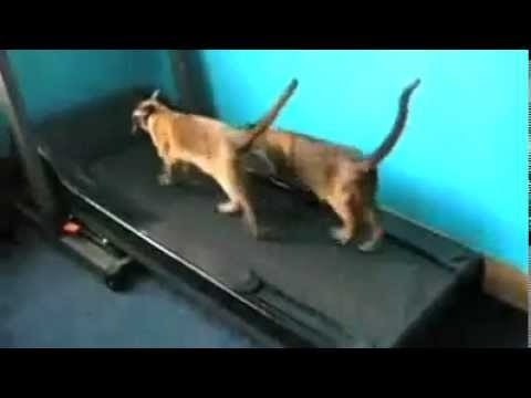 Funny Cats - Funny Videos - Funny Cat Clips