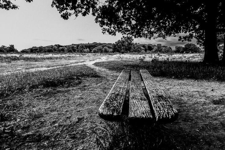 https://flic.kr/p/vts9Jh | 183/365. Walked across the heath. It was a bit gloomy
