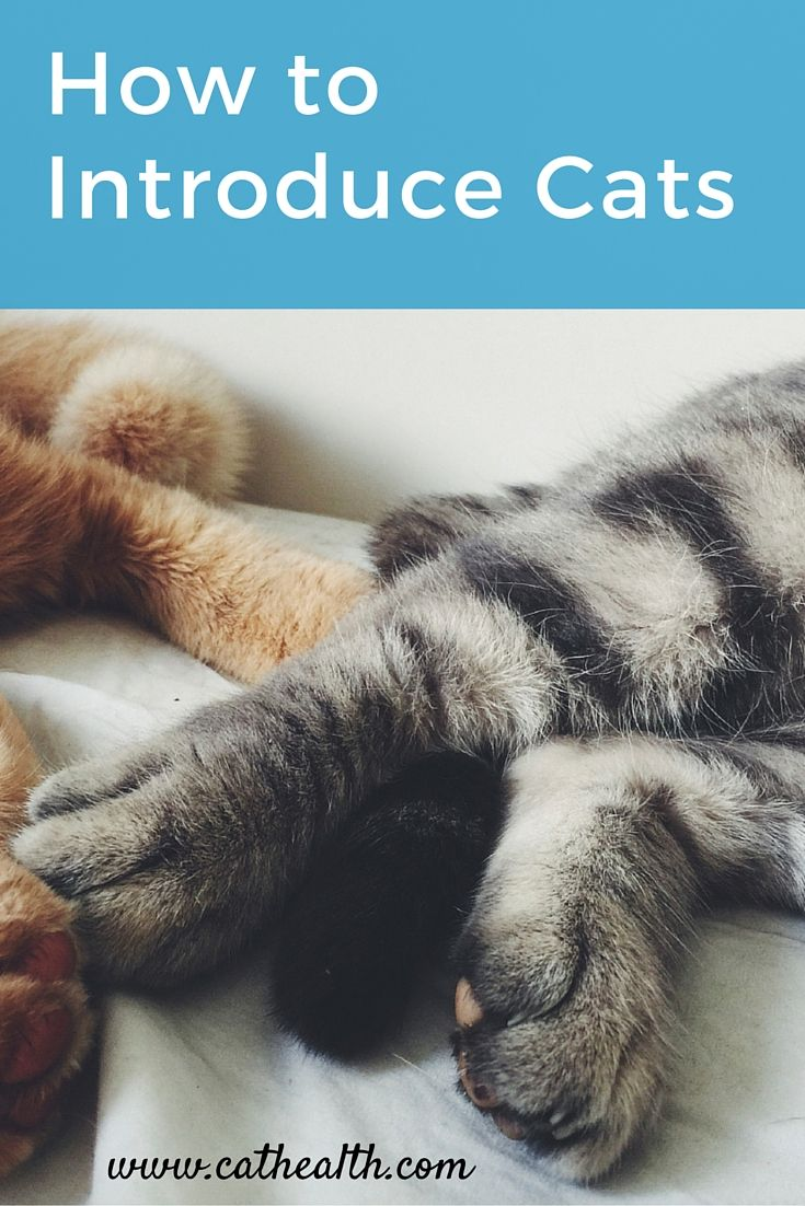 How To Properly Introduce Cats To Dogs