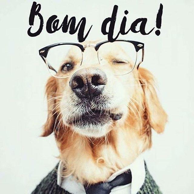 Que todos tenham um BOM DIA #petmeupet #bomdia #cachorro #gato