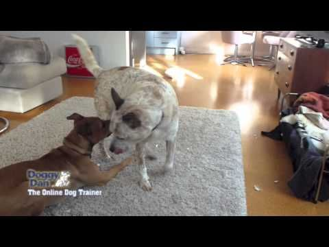 How to Train a Dominant Dog - Dog Training Me