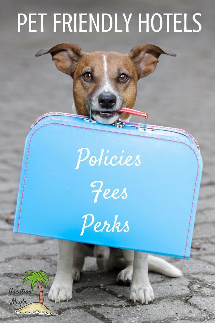 Best Pet Friendly Accommodation For Your Vacation