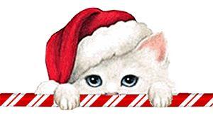 Katzen-Weihnachtsbilder - Weihnachtsbilder Tiere im Weihnachtsportal hinzugefügt. http://weihnachten.bilder-web.com/
