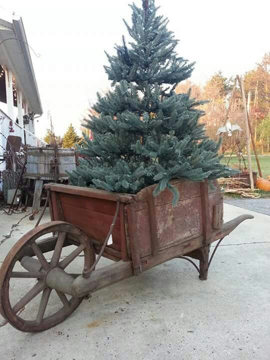 What a great idea...I'd put a ready-to-plant tree in a wheel barrow and decorate it with treats for the wildlife...then plant it after Christmas