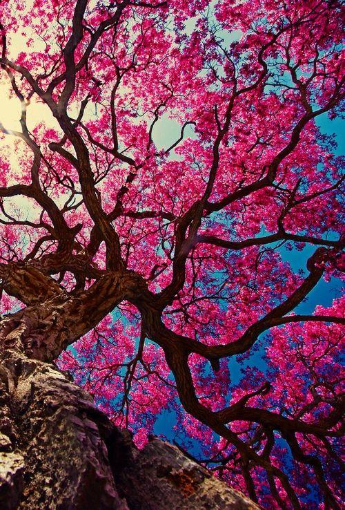 www.FarrScape.com  Sakura