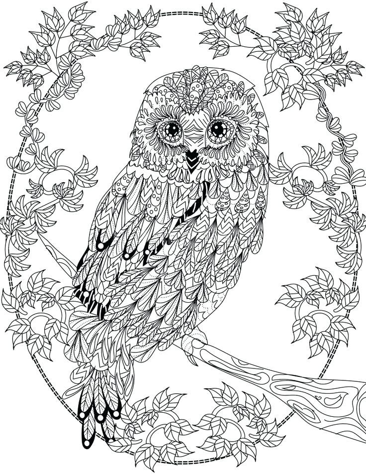 Animal Mandala Coloring Pages Best Coloring Pages For Kids Detailed Coloring Pages Owl Coloring Pages Bird Coloring Pages