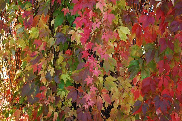 Autumn Carpet | by littlekiss☆