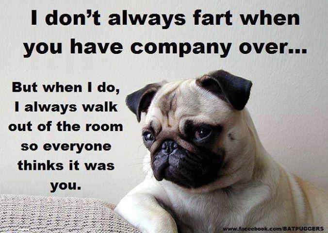 Pug Humor