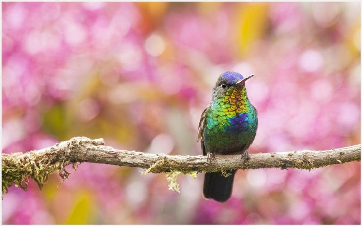Hummingbird Colorful Background Wallpaper | hummingbird colorful background wallpaper 1080p, hummingbird colorful background wallpaper desktop, hummingbird colorful background wallpaper hd, hummingbird colorful background wallpaper iphone