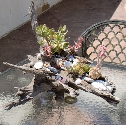 Driftwood planter with succulents for patio table decoration.